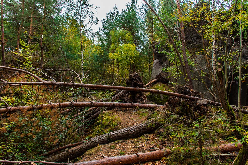 Umgefallene Bäume auf dem Weg
