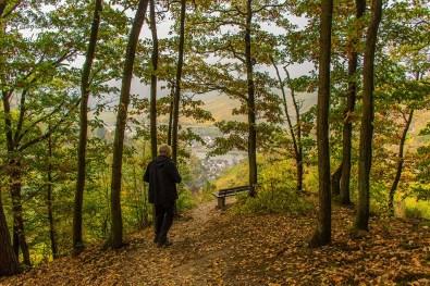 Waldwege laden zum entspannen ein