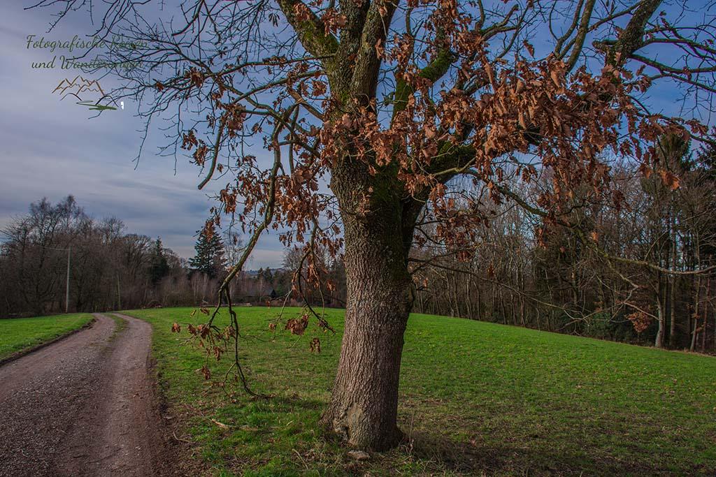 Feldweg Dortenbach