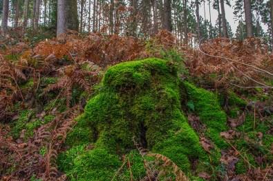 D1 Siefen, Wälder und Höhen (114)