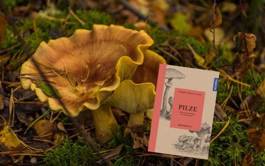 Rezension-Pilze-Faszinierende Wesen im Verborgenen-Cover