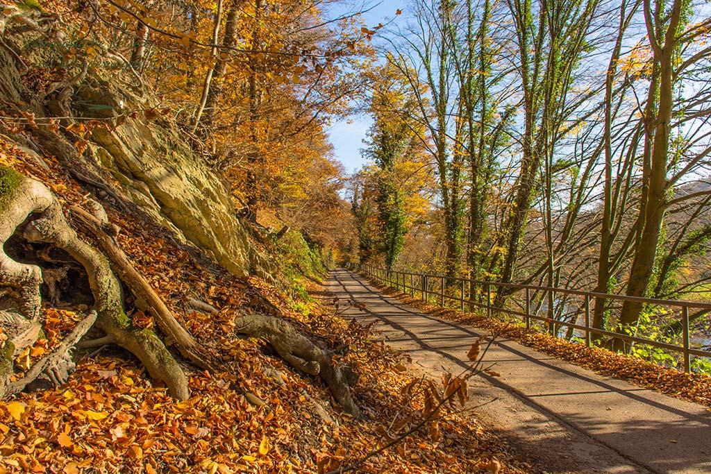 Teerweg zwischen Wupperhängen und Fluss