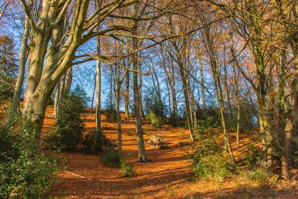 Ein Blick in den aufgeräumten Wald