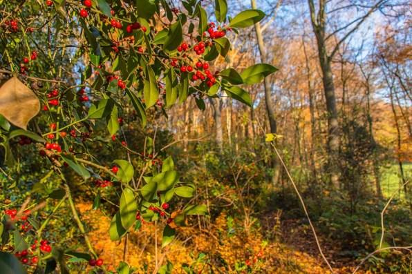 Die Farben des Herbstes - WOW