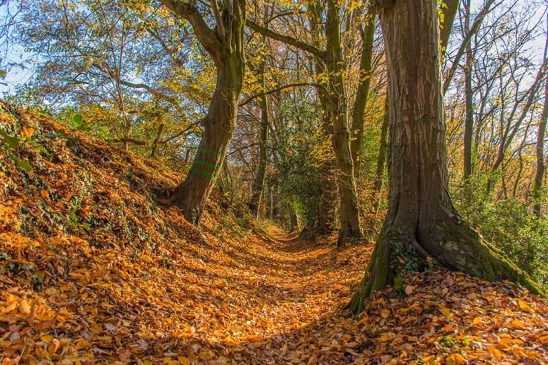 Ein Hohlweg im Herbst