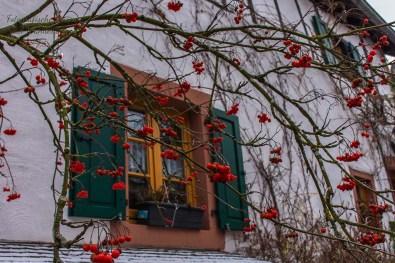 Die Vogel-Winter-Beeren