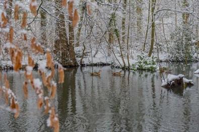 Wasservögel sind hier immer - Rundgang durch Schlosspark Morsbroich