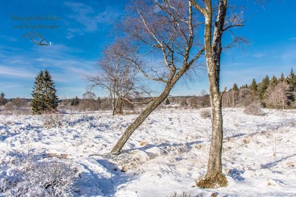 Schneewanderung in Muetzenich (42)