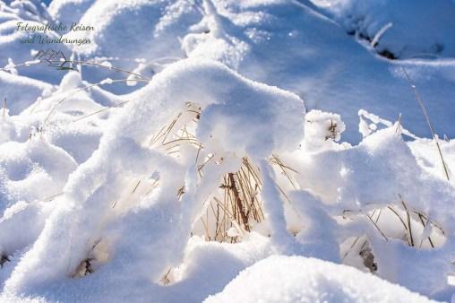 Schneewanderung in Muetzenich (57)