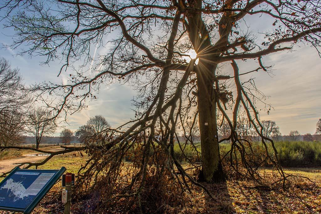 Tief stehende Sonne in der Wahner Heide