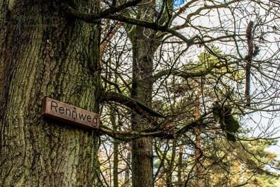 Wahner Heide-Durch die Maikammer (75)