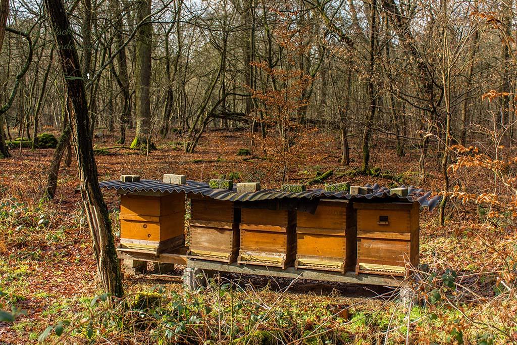 Fünf Bienenkästen in der Wahner Heide