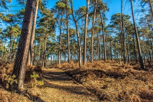 Der typische Wald einer Vennlandschaft - NAdelbäume