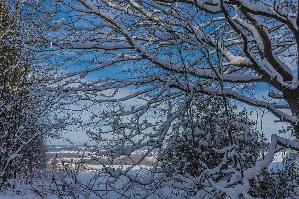 Schnee bedeckte Zweige