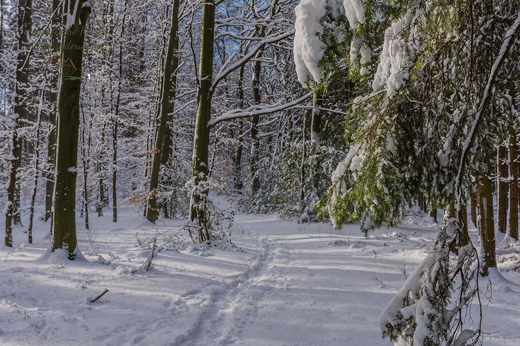 Wieder auf Schnee bedeckten Waldwegen unterwegs - Wandern um das Freilichtmuseum Lindlar