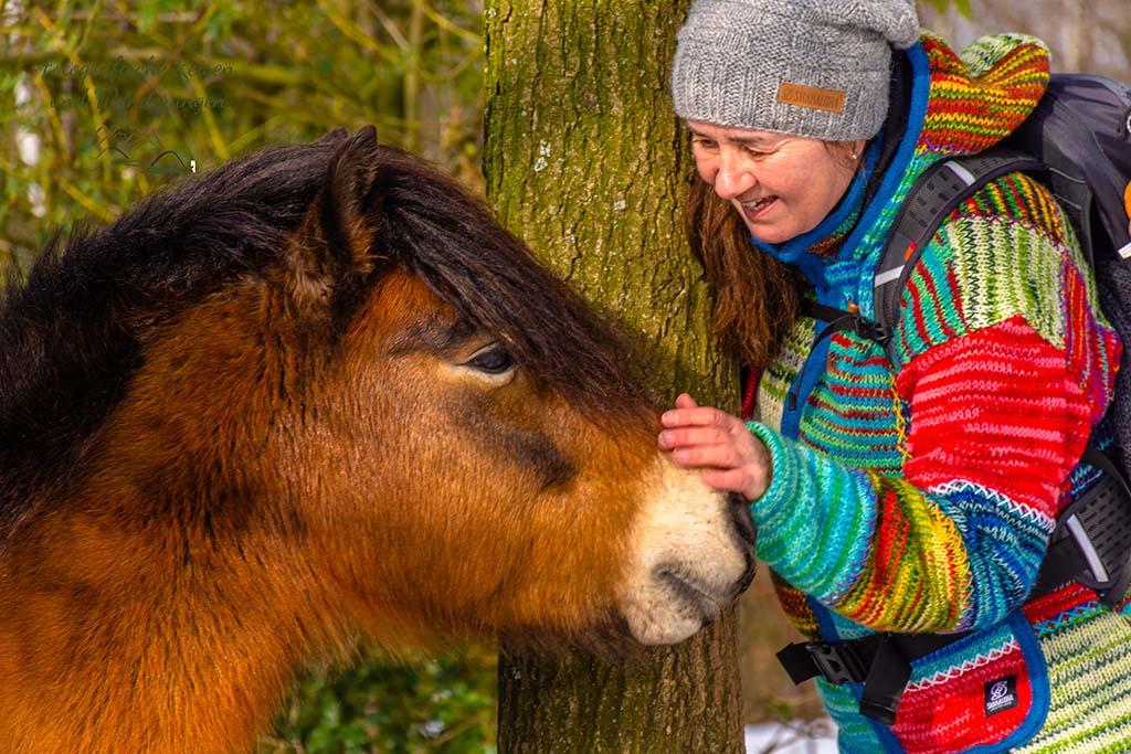 Sehr zutrauliches Exmoor-Pony im Steinbruch
