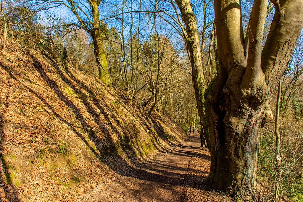 Sonnige Waldwege mit altem Baumbestand- Rundweg Rösrath