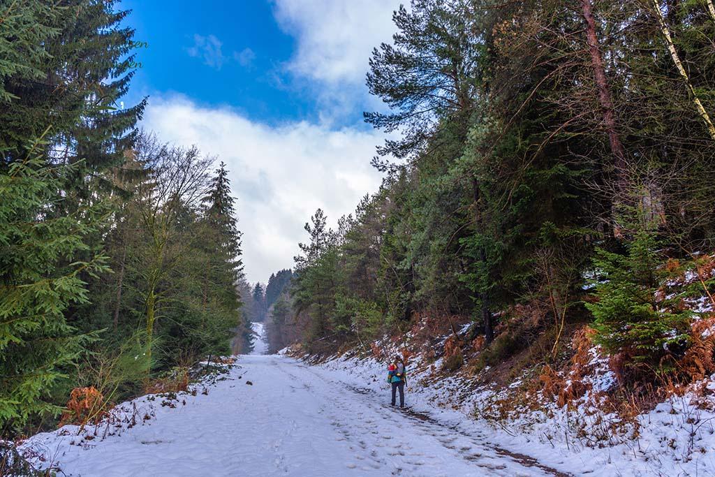 Schnee bedeckte Wege über eine Waldschneise
