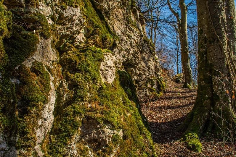 Weg zur Fuchshohle auf der Eifelschleife