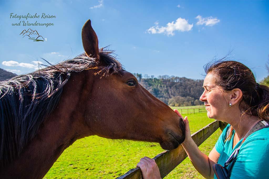 Wandern bei Blankenberg an der Sieg - Pferde und Tanja
