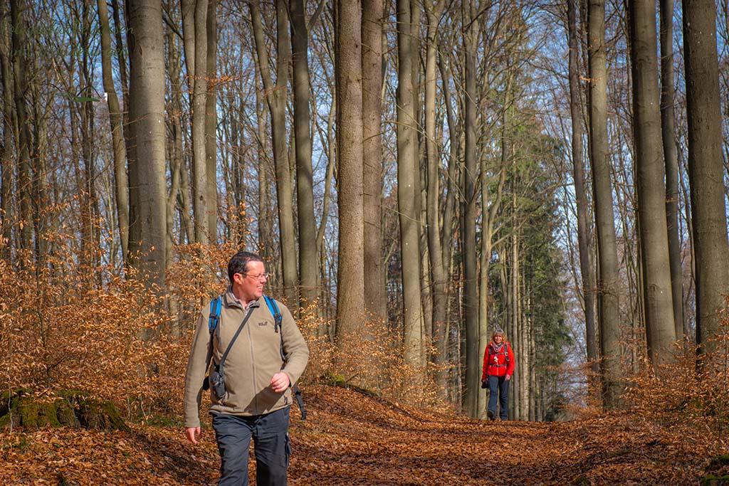Nachzügler im Wald - Wäller Tour Elberthöhen