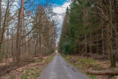 Schnurgerade verlaufender Waldweg