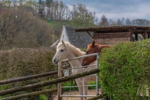 Am Pferdegestüt Schlauser Mühle - Eifelsteig Etappe 1