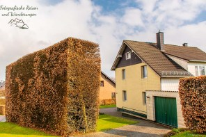 Hohe Rotbuchenhecken an den Eifelhäusern sind typisch