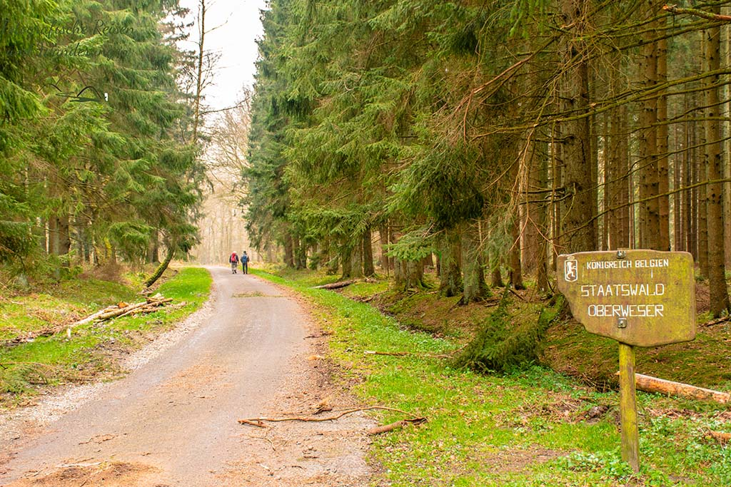 Staatswald Oberweser in Belgien