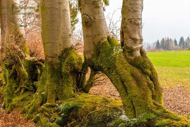 Merkwürdige Baumform
