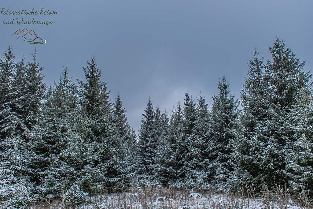 Schnee bedeckte Landschaft - Auf der Suche nach Wilden Narzissen