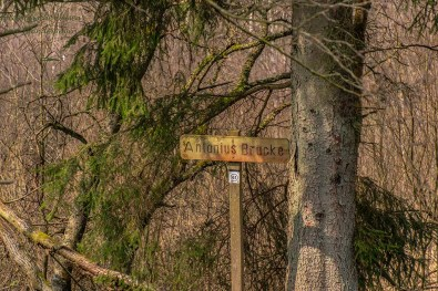 Furthsbachtal Narzissenwanderung (59)