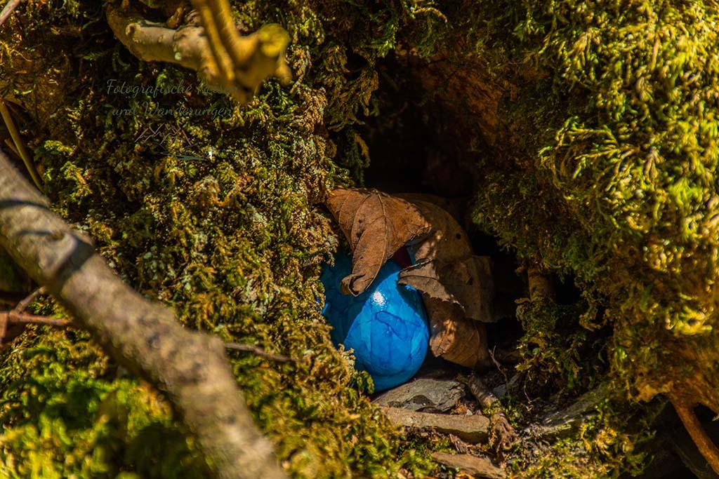 Ein blaues Osterei in einem Astloch