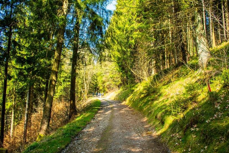 Wieder so ein lichter Waldweg