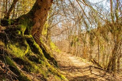 Baum neigt sich Richtung Wanderweg