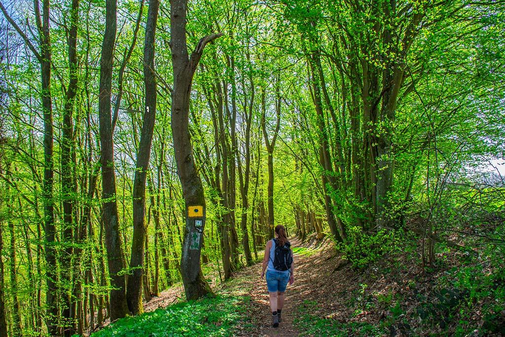 Helle Waldwege auf dem Zwei Bäche Pfad