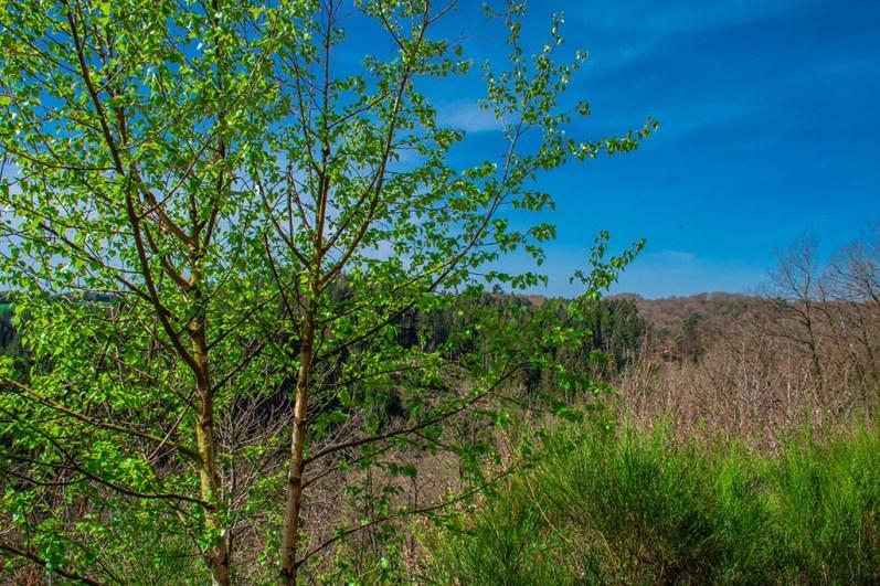 Bäume im Frühlingskleid