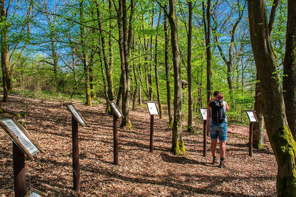 Lieder der Eifel auf Notenblättern im Wald - Zwei Bäche Pfad