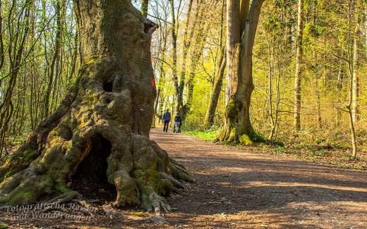 Weg der Artenvielfalt Bonn
