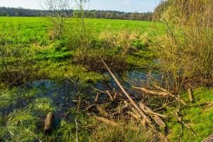 Biotop an der Aussichtsplattform auf dem Weg der Artenvielfalt