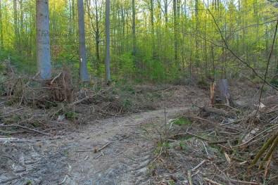 Dann wieder zeigt sich der Wald zerrupft und traurig