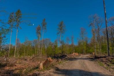 Spärliche Reste eines Waldes auf dem Wildwiesenweg