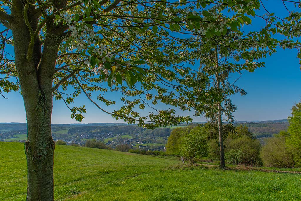 Blick auf Harmonie - Wildwiesenweg