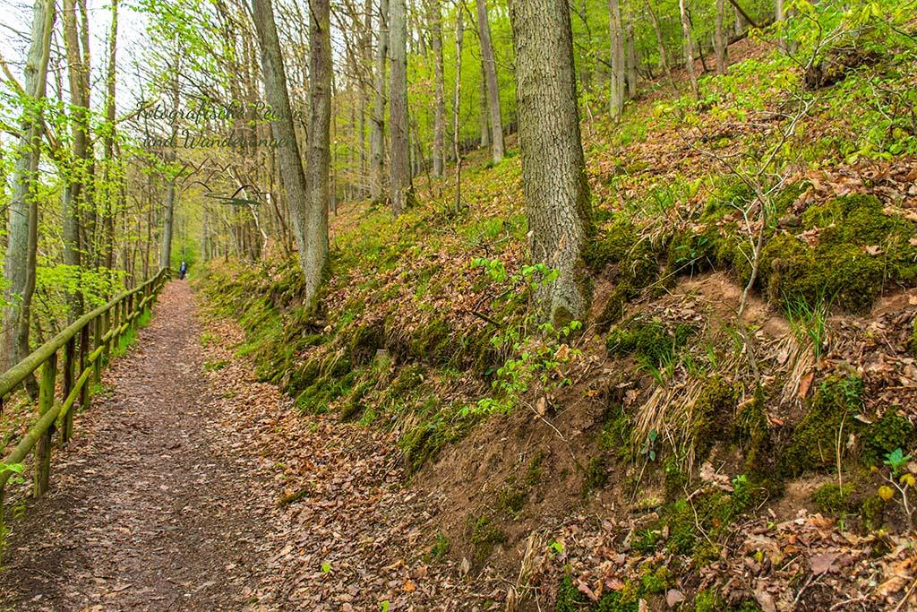 Herrlicher Waldweg- natürlich bergan - Eifelsteig zwischen Gemünd und Kloster Steinfeld