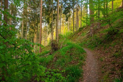 Eifelsteig_Monschau-Einruhr (204)