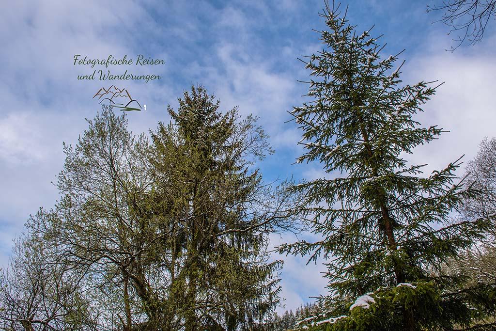 Die Sonne, Schnee und grüne Blätter an den BÄumen