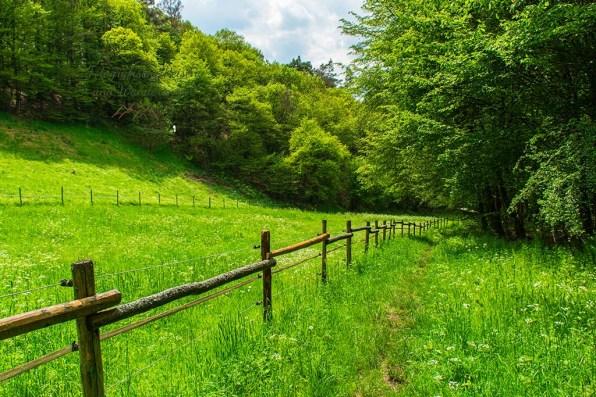 Wiesenwege - Abenteuer Wanderung im Sahrbachtal