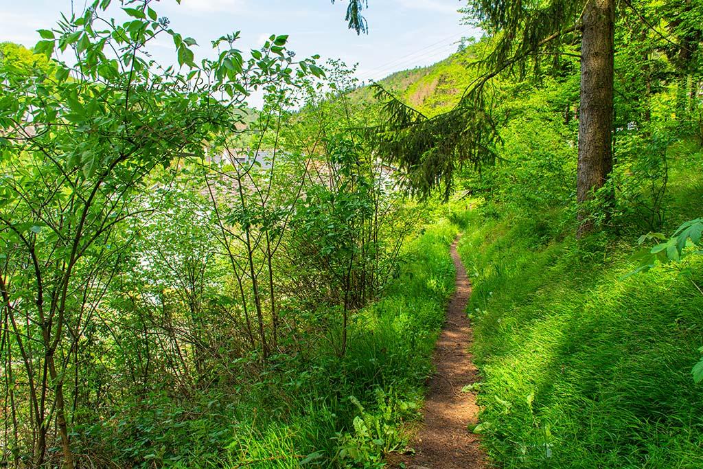 Schmaler Wiesenpfad - Abenteuer Wanderung im Sahrbachtal