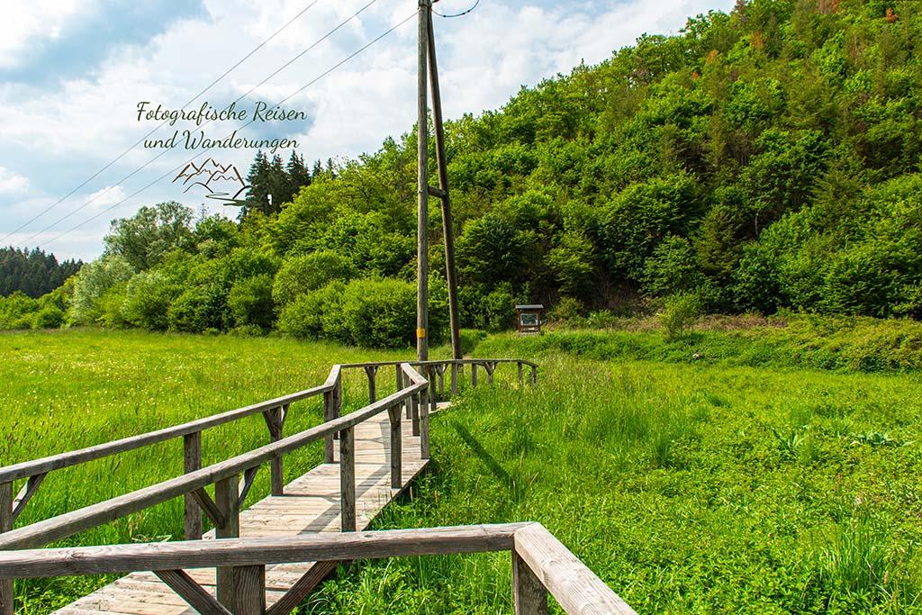 Brücke über das Feuchtbiotop im Sahrbachtal - Abenteuer Wanderung im Sahrbachtal