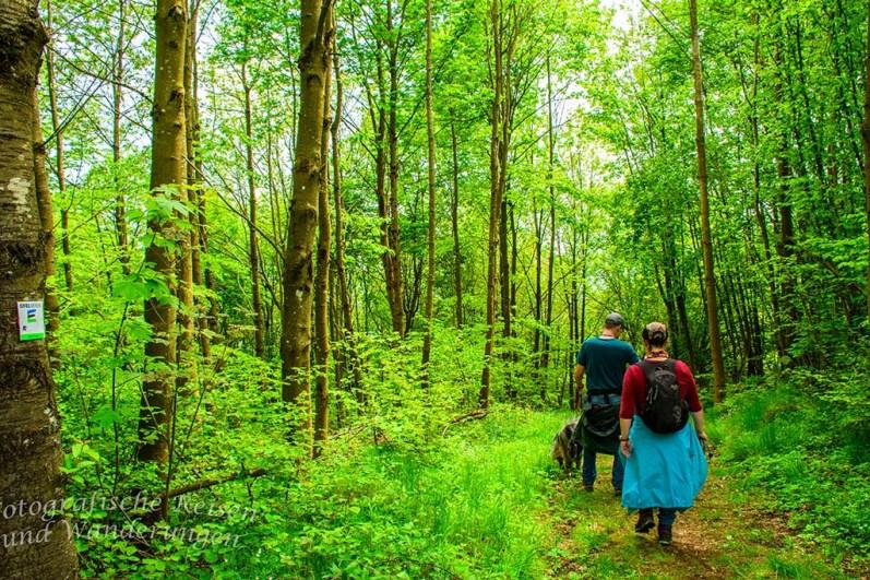 Unmittelbar am Hochsimmerturm führt der Waldpfad wieder in die Tiefe